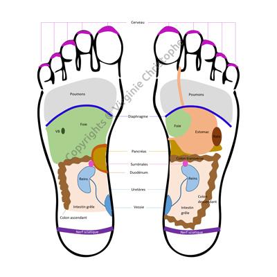 Cartographie pieds par Virginie Christophe